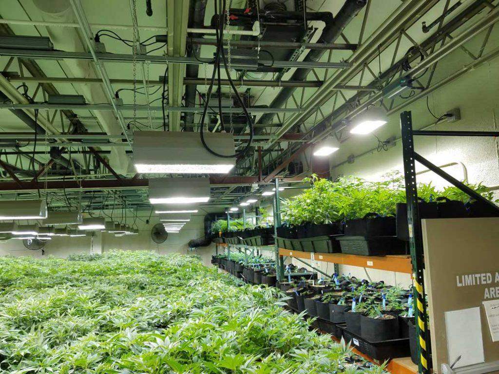 grow facility for cannabis